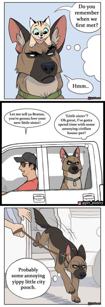 Pixie And Brutus Comics Already Have Over 2.4M Followers And Here Are Their 4 Newest Strips